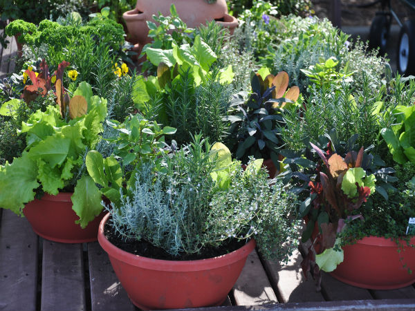 Best Vegetables To Grow In Containers | Vegetables That Can Grow In  Containers | Vegetables That