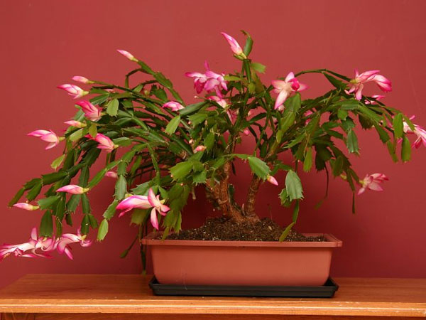 Tips To Grow Indoor Plants Care And Maintenance How For