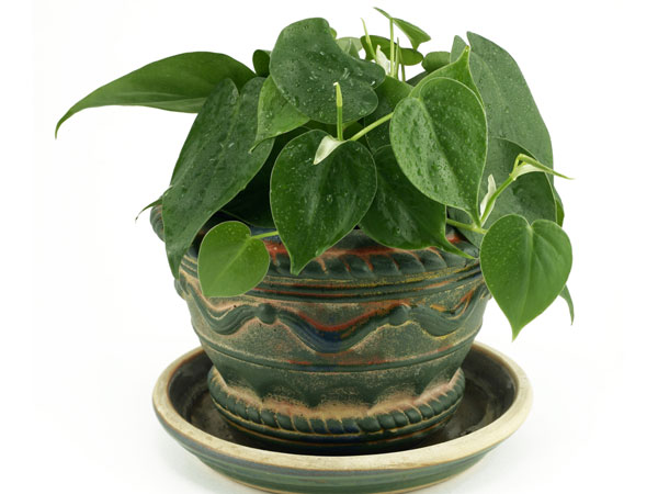 Tips To Care For House Plant