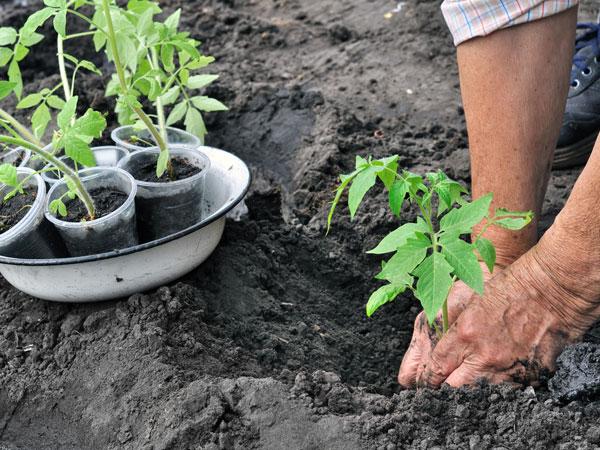 Benefits Of Using Wood Ash In Garden - Boldsky.com