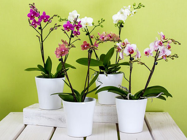 Orchid Plants Care Instructions Tips For Ways To