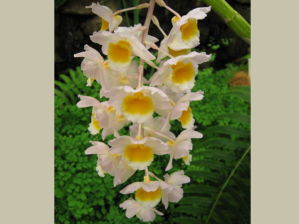 Tips To Take Care Of Orchid Plants Boldsky