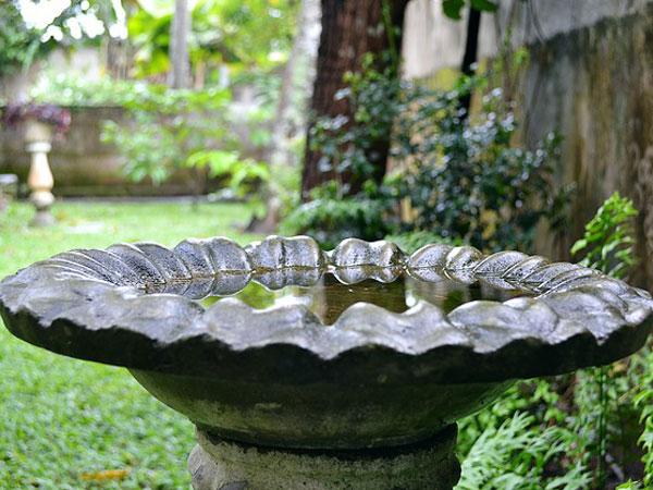Delightful Bird Bath In Garden | Bird Bath Garden Ridge | Types Of Bird Baths | Best