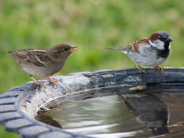 Marvelous Bird Bath In Garden | Bird Bath Garden Ridge | Types Of Bird Baths | Best