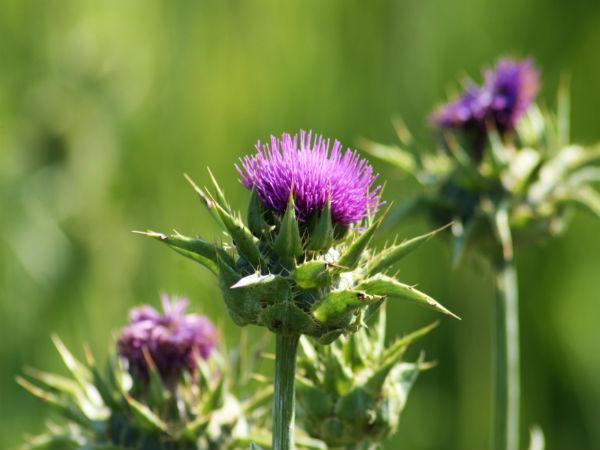 Best Natural Appetite Suppressant Herbs