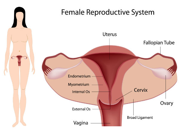 6 Health Tips For A Healthy Reproductive System Boldsky Com