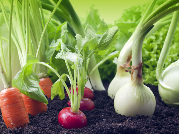 Own A Vegetable Garden