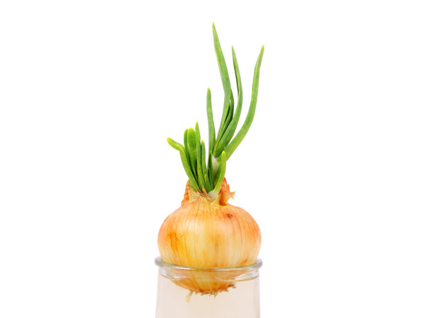 Grow Green Onions In Your Kitchen