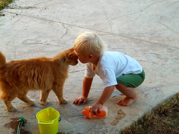 How Pets Benefit Child Development2