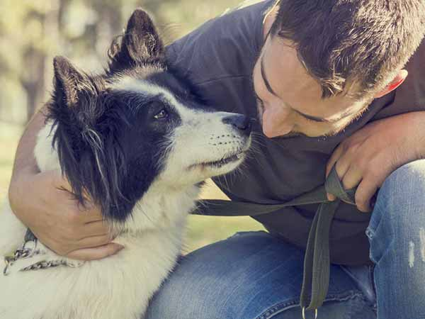 reasons why men who love dogs are perfect