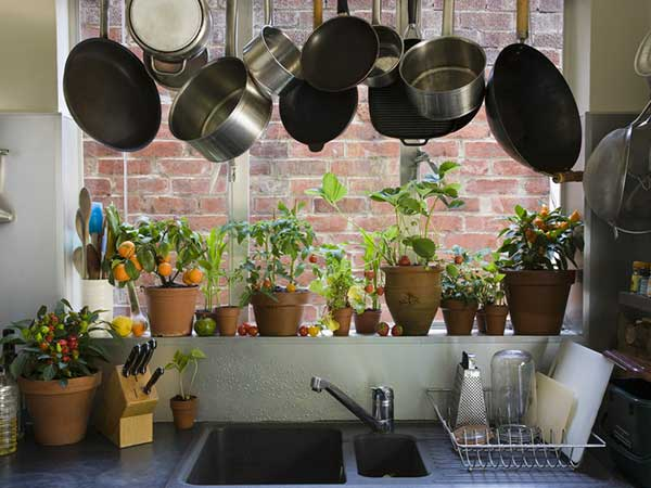 how to decorate your kitchen with plants