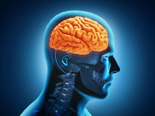 Seven Common Herbs That Improve Brain Health