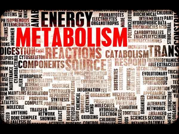 5 Best Ways To Increase Metabolism Rate