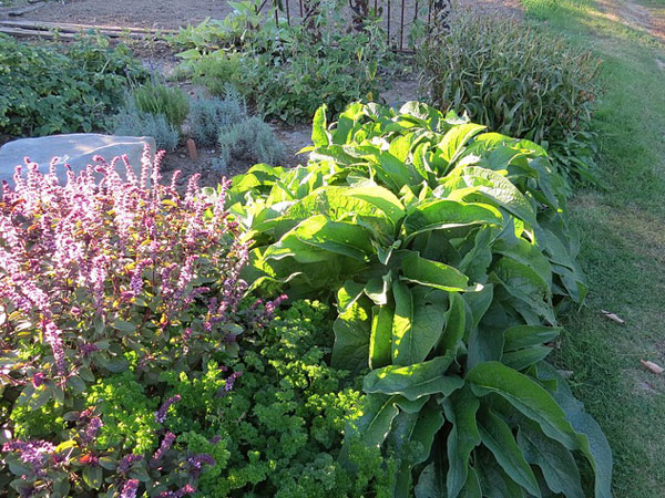 Exotic Herbs You Must Grow in Your Garden