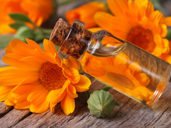 Amazing Health Benefits Of Calendula Oil