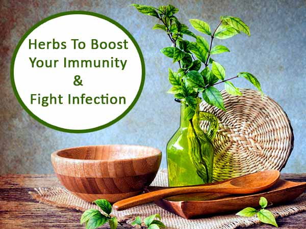 Top Antiviral Herbs To Boost Your Immunity And Fight
