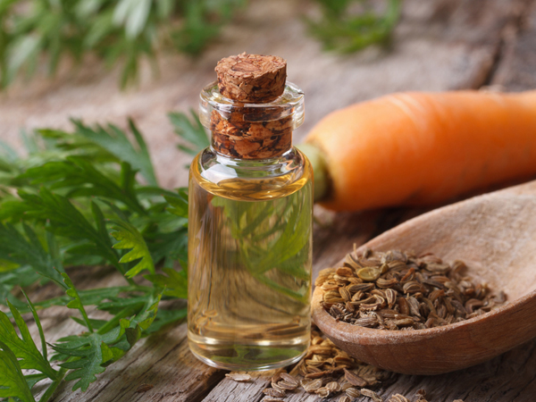 Health Benefits of Carrot Seed Oil
