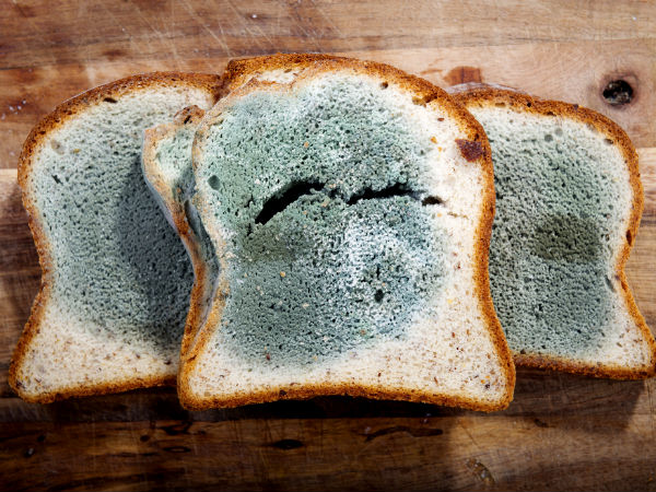 Moldy Bread: throw away or cut and eat 96
