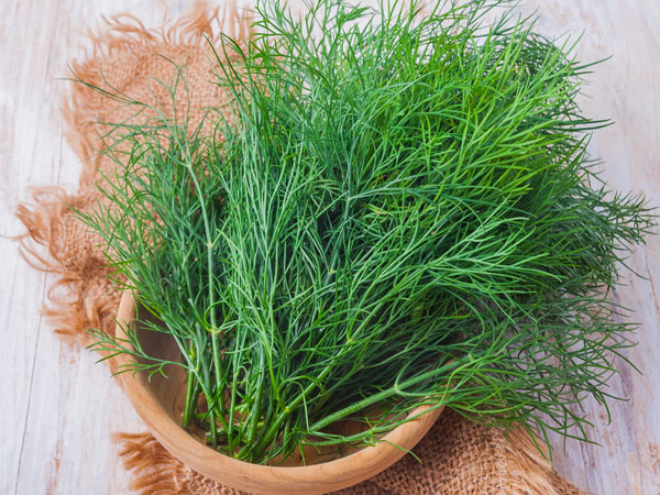 Why You Should Include Dill In Your Diet6