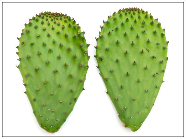 Benefits of eating cactus leaf - Advantages of cactus plant ...