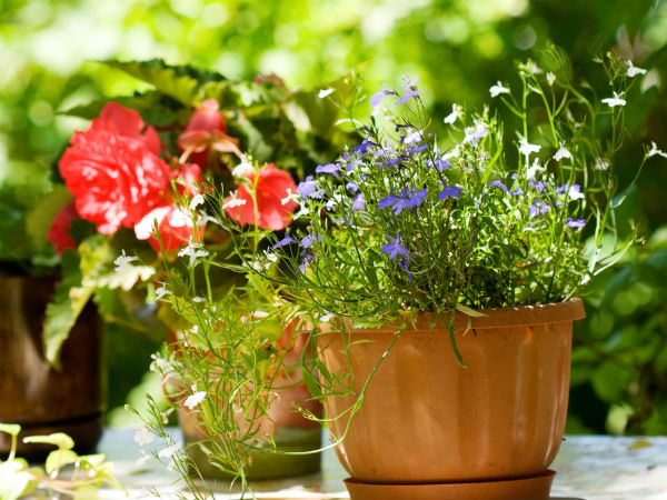 Herbs to Grow in Pots