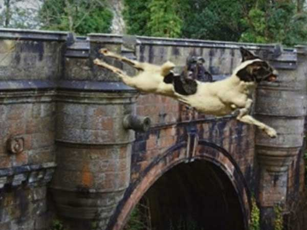 Have You Heard About Dog's Suicide Bridge?