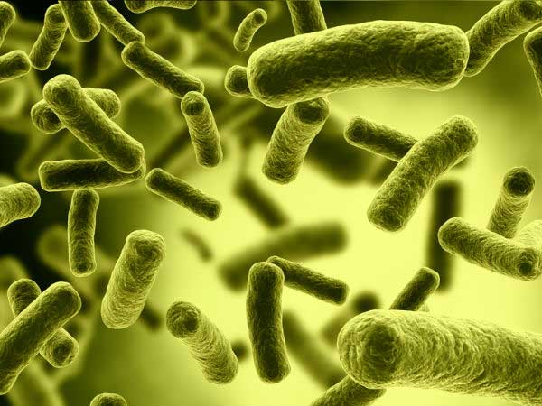 why unhealthy gut bacteria cause high blood pressure
