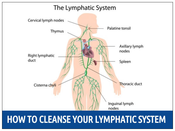 How To Cleanse Your Lymphatic System Boldsky Com
