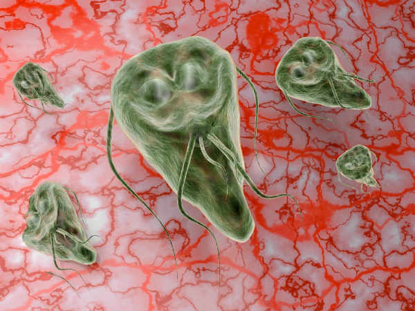 Natural Cure For Giardia