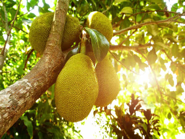 This Fruit Is A Strong Cancer Killer! Read To Know More