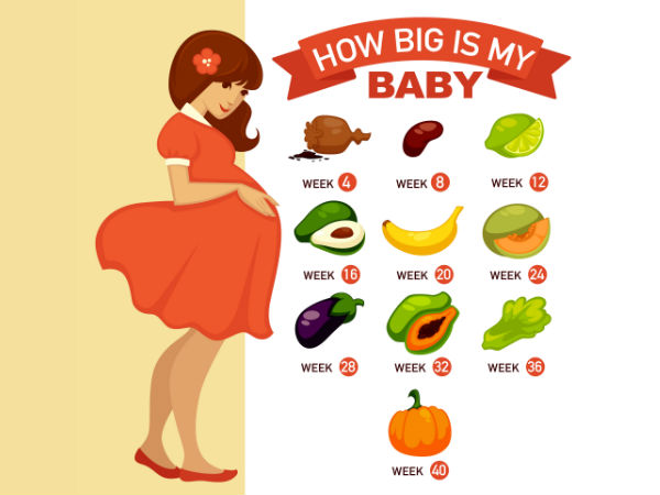 How Big Is Your Baby? The Size Of Your Baby During Various ...