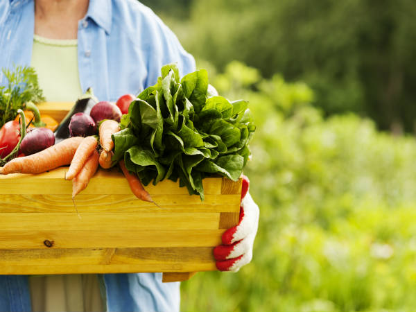 Best Health Benefits of Organic Food That You Need To Know