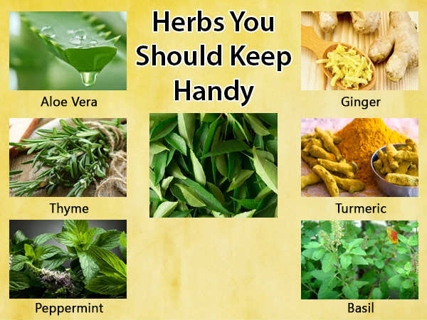 15 Healing Herbs That You Should Keep Handy