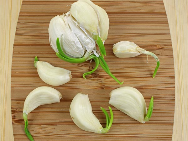 Is Sprouted Garlic Safe To Eat?