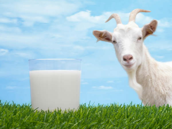 Is Goat Milk Good For Health?