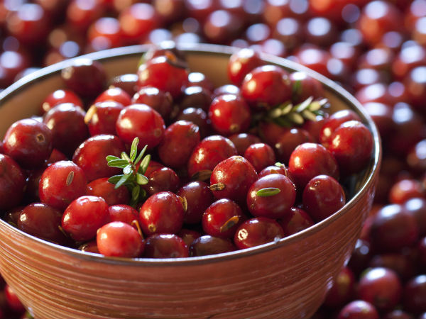 Cranberries Help Prevent UTI Finds Research; Other Health Benefits Of Cranberries