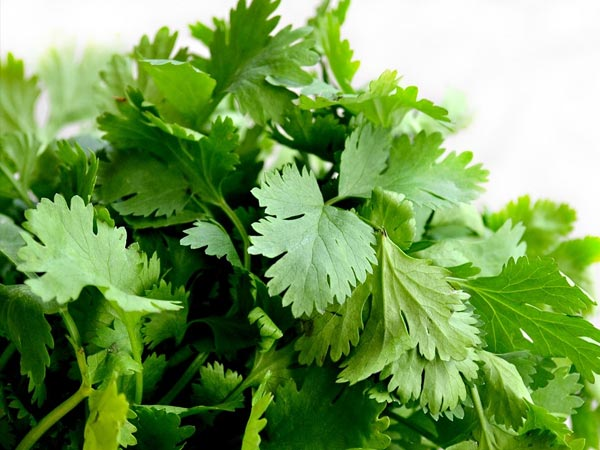 3 Best Ways To Apply And Use Coriander Leaves For Skin Care