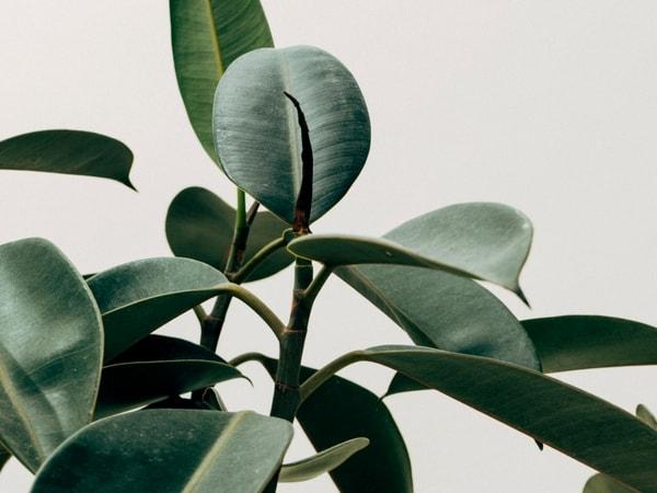 Benefits Of Having Plants In Your Bedroom 9 Best Indoor Plants For