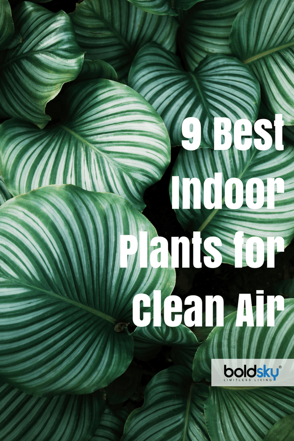 Benefits Of Having Plants In Your Bedroom 9 Best Indoor