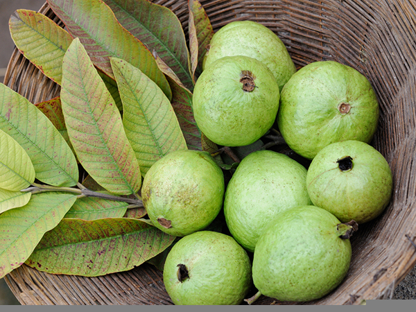 How To Use Guava Leaves For Hair Problems