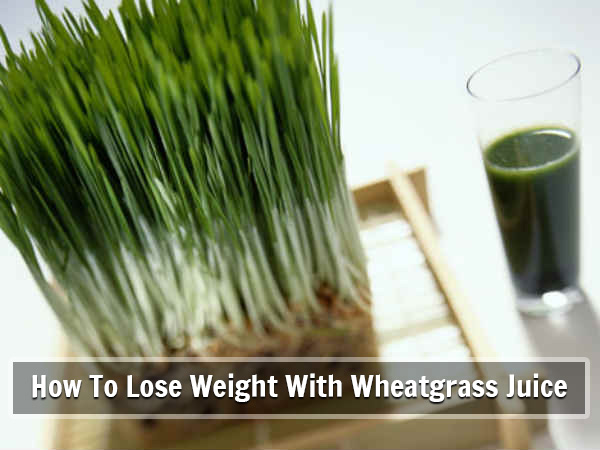 Wheatgrass benefits weight loss