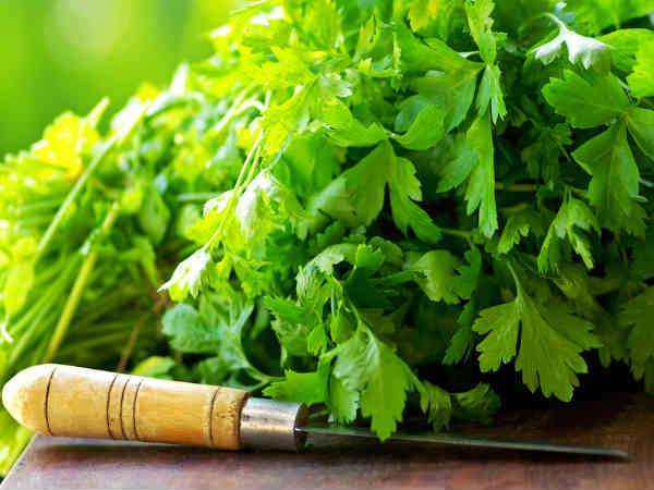 Reduce Gastritis + 6 Other Health Benefits Of Parsley