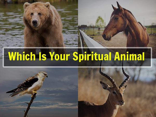 What Is Your Spiritual Animal As Per DOB