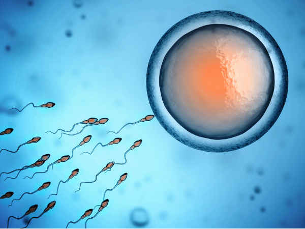 Causes Of Infertility In Males And Females