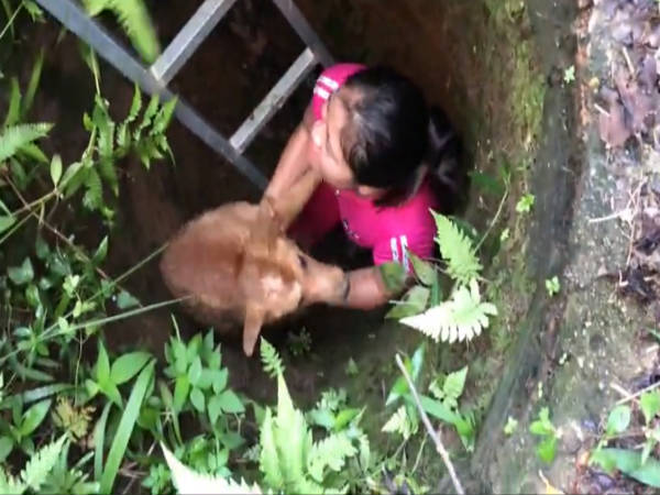 Dog Trapped In Hole Was Rescued Finally