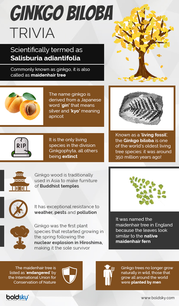 ginkgo facts