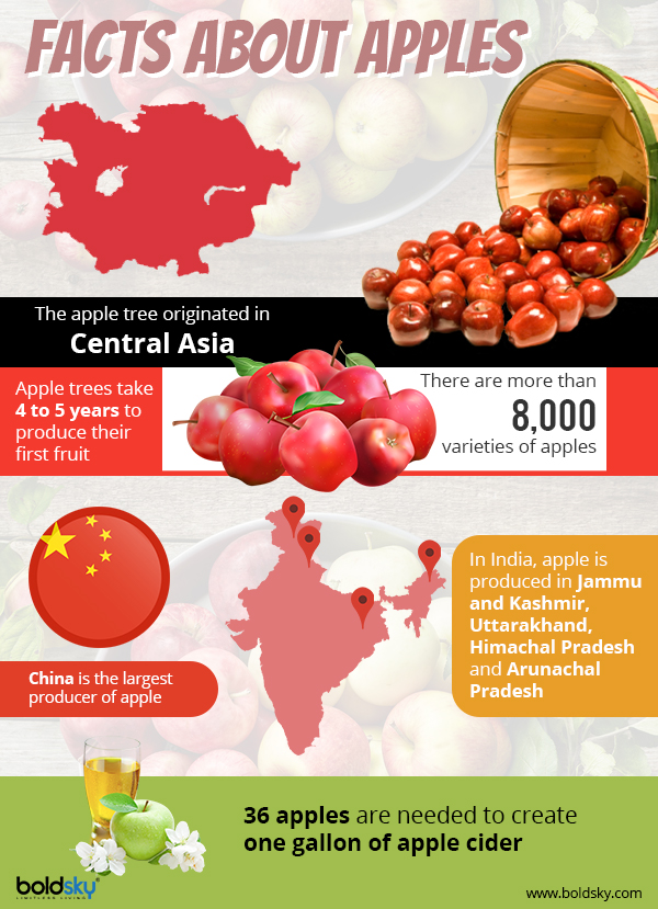apple fruit benefits infographic