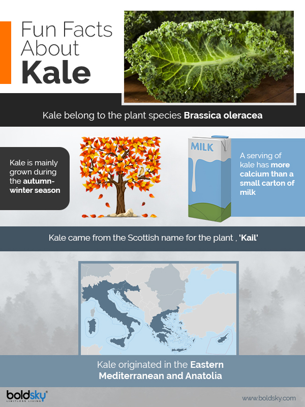 kale benefits infographics