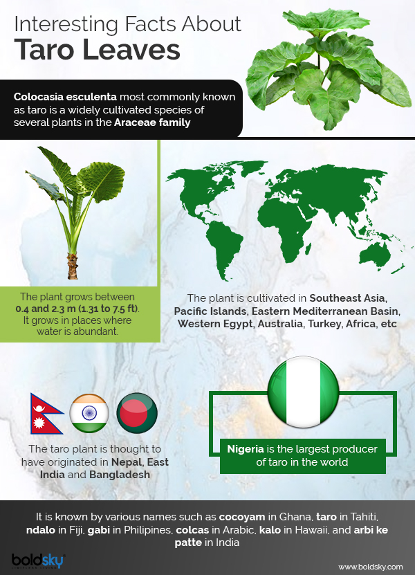 taro leaves benefits infographic