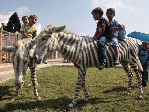 5 Disturbing Pictures Of Zoo That Staff Does Not Wish You To See!